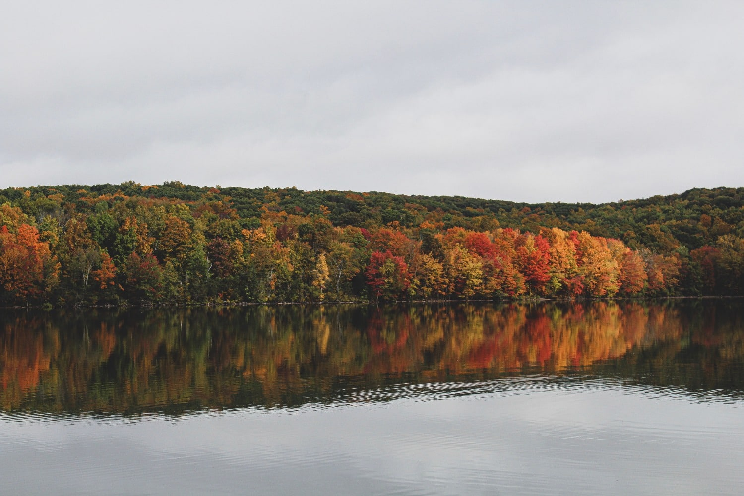 fall foliage next to wide river