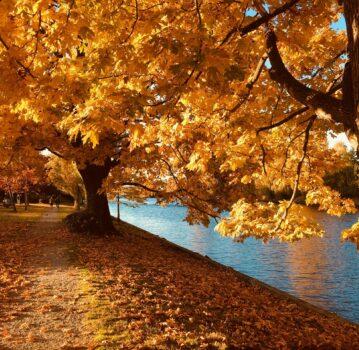 orange toned fall scene along river